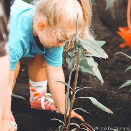 Giardinaggio, bricolage e non solo ma #iorestoacasa