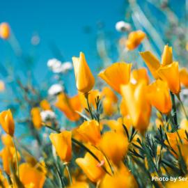 Primavera e passione per il verde
